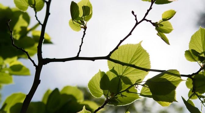 The Ecology of Progress